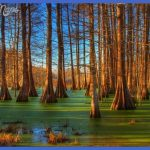 ... found for 2013 02 21 Guest Post Swamps And Bayous Of Louisiana Cruises