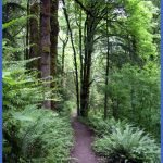 Wildwood Trail - Forest Park, Portland