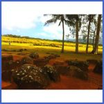 Travel to Hawaii_6.jpg