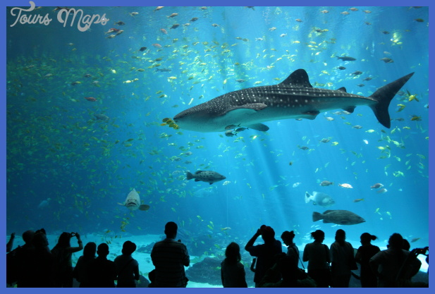 File:Male whale shark at Georgia Aquarium.jpg - Wikipedia, the free ...