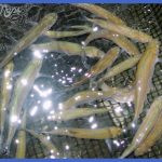 bait for freshwater species fishing 2 150x150 Bait for Freshwater Species Fishing
