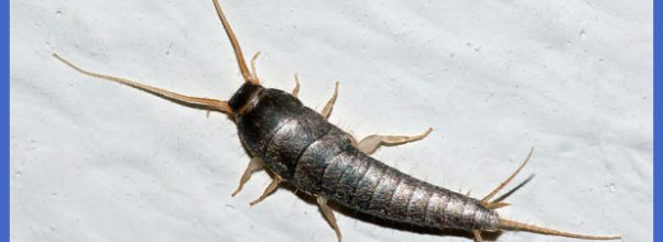 Clegg's Termite and Pest ControlHome Remedy Fact or Myth: Does the ...