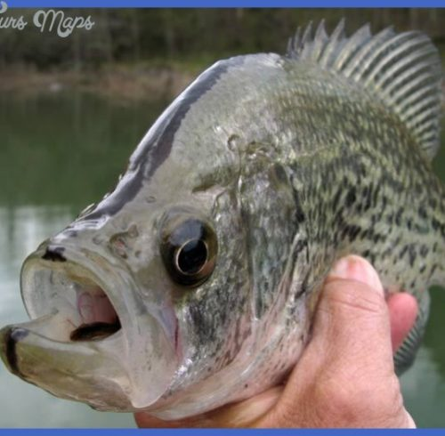 The Blacknose Crappie - KentuckyAngling News Magazine ...