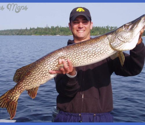 Northern Pike /Fish of the