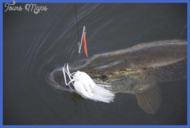 fishing northern pike 11 Fishing: Northern Pike