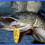 fishing northern pike 14 150x150 Fishing: Northern Pike