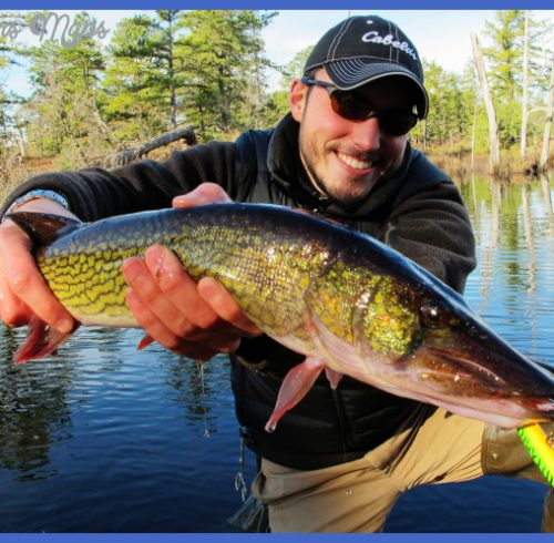 Pickerel Fish What: pickerel fishing with