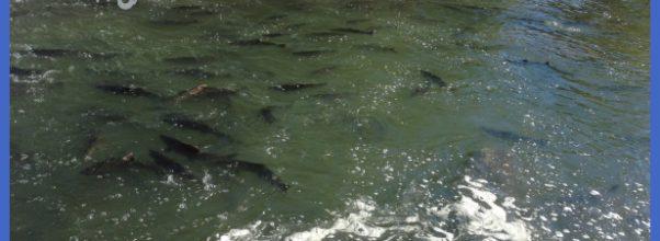 ... fishing regulations and seasons home outdoor adventure fishing fishing