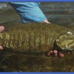 Fly Fishing for Smallmouth Bass - Fly Fisherman