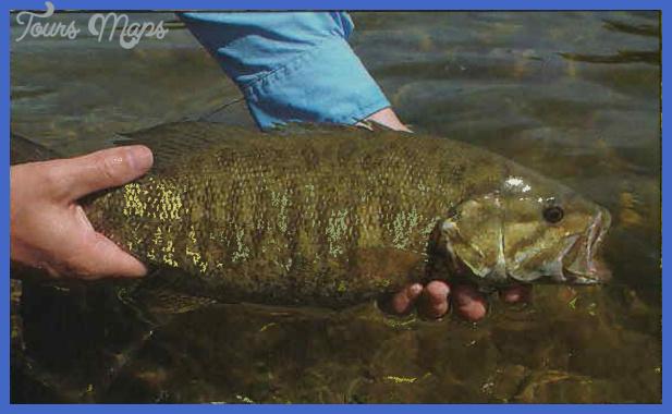 fishing smallmouth bass 3 Fishing: Smallmouth Bass