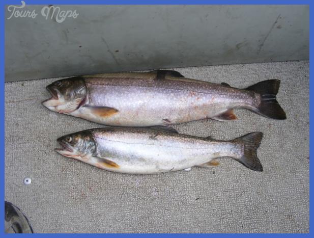 fishing splake 9 Fishing: Splake