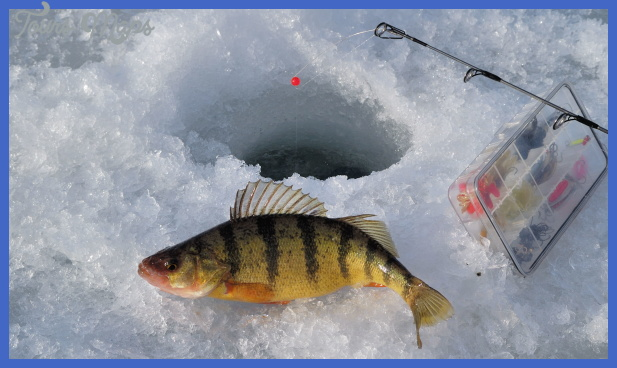 Ice Fishing  Yellow Perch | Colorado Outdoors Online