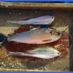 fly fishing hot line 2 150x150 Fly Fishing Hot Line
