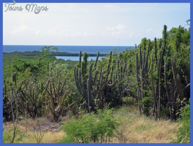 guanica dry forest 7 Guanica Dry Forest