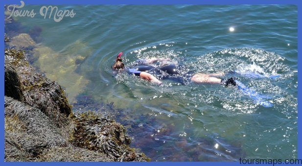 Snorkeling for Star Fish at Edge of Rockland Breakwater: