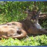 backstage' tour of Maine Wildlife Park's moose, deer, bobcat ...