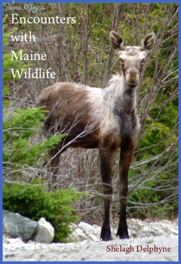 Encounters with Maine Wildlife (ebook) | Blurb