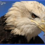 Maine Wildlife Park, Gray, ME | Group Travel in Maine