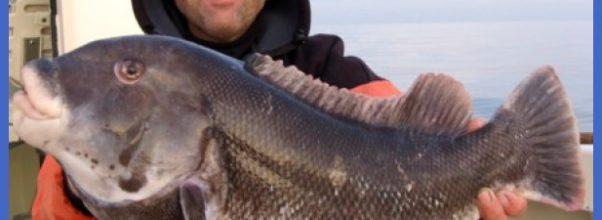 Capt. David Goldman of Shore Catch Guide Service