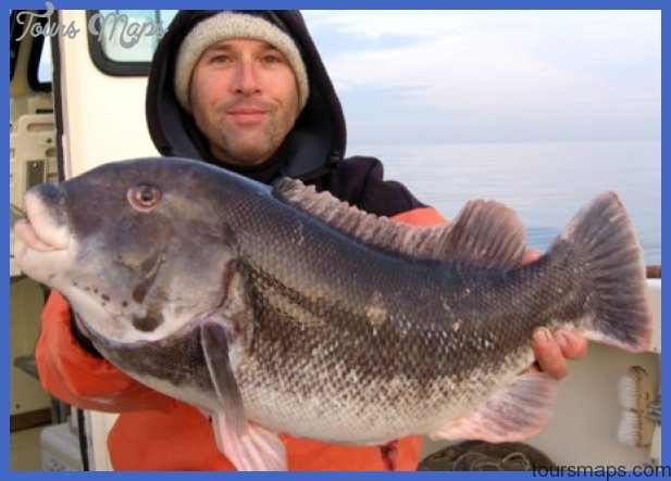 Capt. David Goldman of Shore Catch Guide Service
