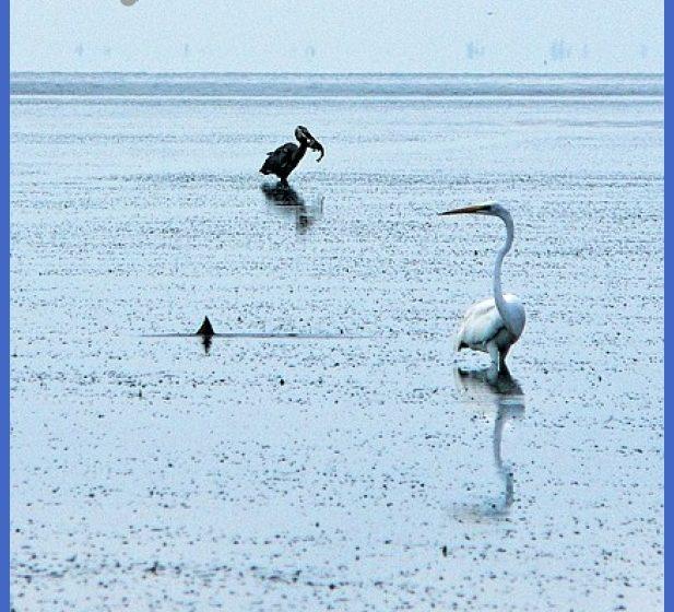 Tides in Fishing - Florida Sportsman