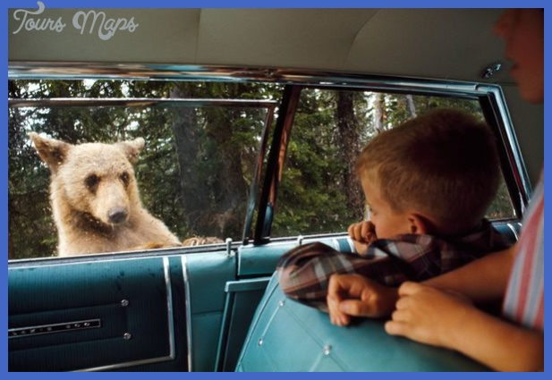 where are all the yellowstone bears now  19 Where Are All the Yellowstone Bears Now?