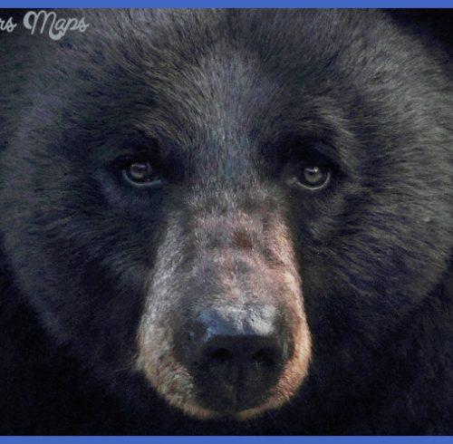 """미국 """"예로스톤(YELLOWSTONE)"""" 국립공원의 야생동물들 ..."""