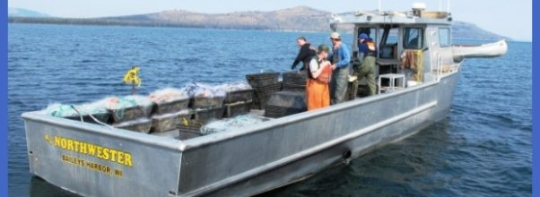 Yellowstone boosts efforts to remove lake trout invaders