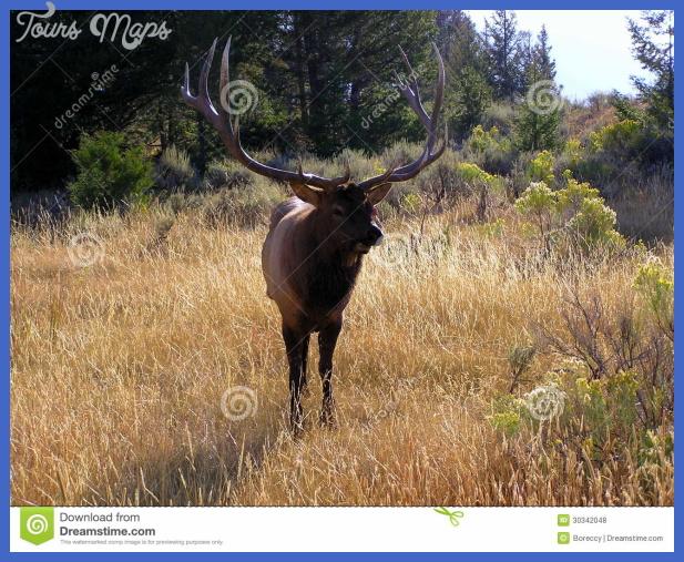 yellowstone larger mammals  0 Yellowstone Larger mammals