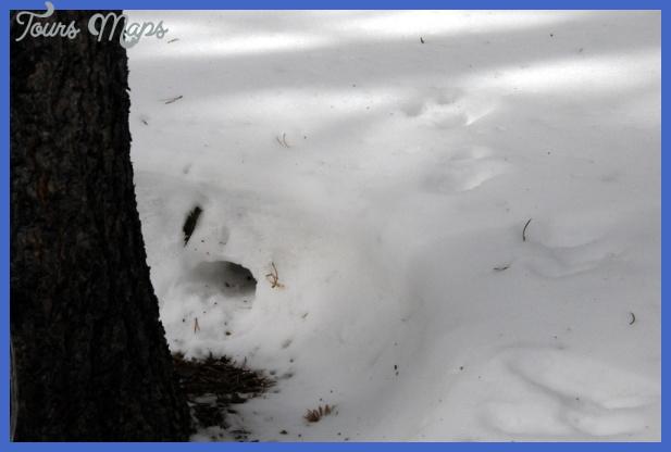 yellowstone larger mammals  16 Yellowstone Larger mammals