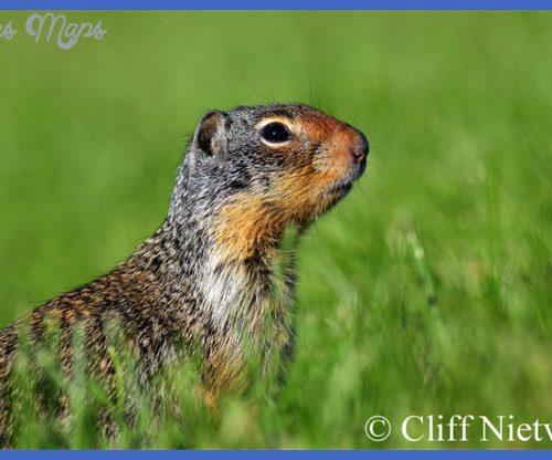 Cliff Nietvelt Photography | Small Mammals