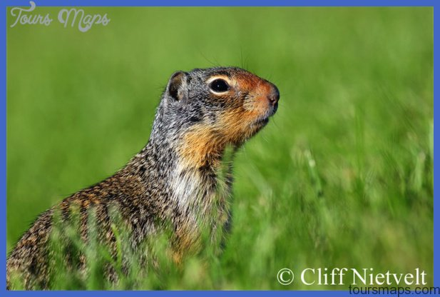 Cliff Nietvelt Photography | Small Mammals