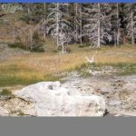 yellowstone riverside geyser spur 7 150x150 Yellowstone Riverside Geyser Spur