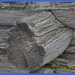 yellowstone road logs and destinations 6 150x150 Yellowstone: Road Logs and Destinations