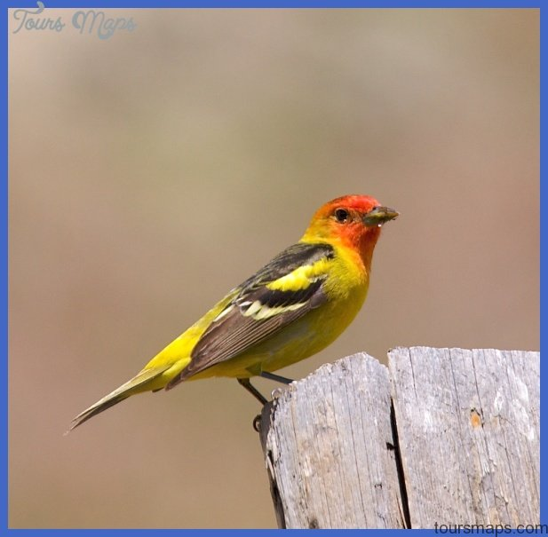 Yellowstone birds -- Birds in photography-on-the.net forums