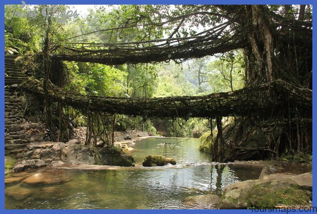 Living_root_bridges-Cherrapunji-place-to-visit-in-august-2015