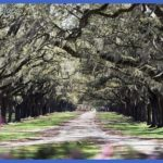 plantationtrees 150x150 Best US tourist destinations