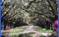 plantationtrees.jpg