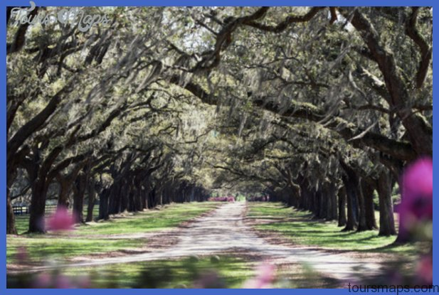 plantationtrees Best US tourist destinations