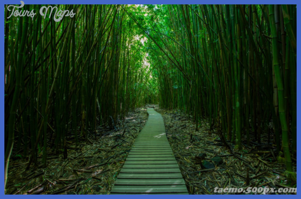 top 29 hawaii pipiwai photo by earl dieta 740x482 Places to see in Hawaii
