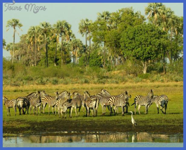 wildlife botswana Best country for tourism