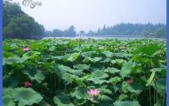 Hangzhou Travel _1.jpg