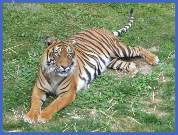 jamala-wildlife-lodge.jpg