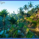 terrace rice fields in ubud bali indonesia 150x150 Best countries to visit in april