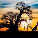 4 day krugerpark safari 6b 150x150 AFRICA