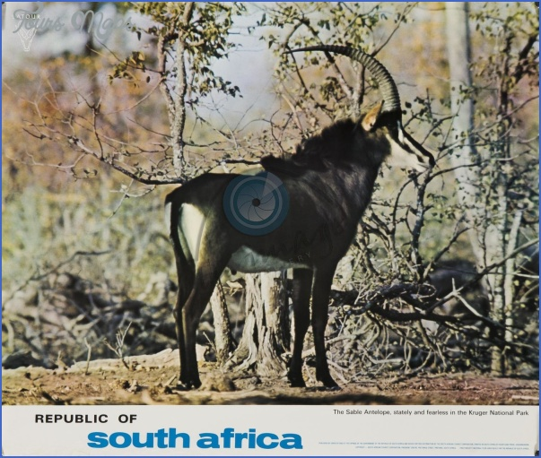 r.o.s.a.-the_sable_antelope_travelposter.jpg