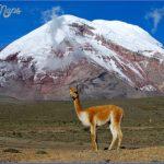 simple science for kids on ecuador image of the vicuna mountain in chimborazo ecuador e1394276583750 150x150 ECUADOR