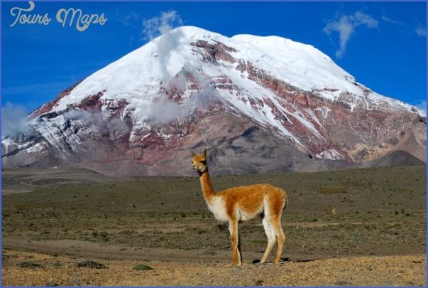 simple science for kids on ecuador image of the vicuna mountain in chimborazo ecuador e1394276583750 ECUADOR