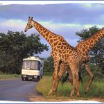 tour coach in the kruger national park 150x150 AFRICA