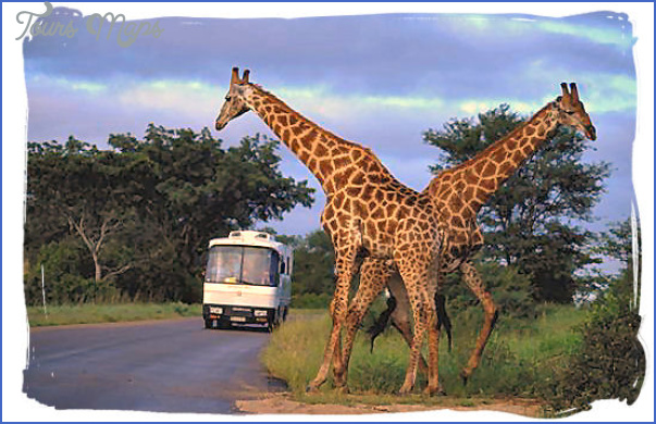 tour coach in the kruger national park AFRICA